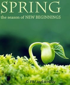 It is a time for cleaning house, new growth in gardens, and baby animals. The new life, new beginnings, and bright, colorful new look that spring brings are hopeful .