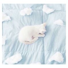 aesthetic, blue, cat, cloud, pale ❤ liked on Polyvore featuring photo