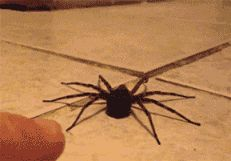 This spider noped out when the person touched him like I do when a spider touches me! The feeling is mutual!