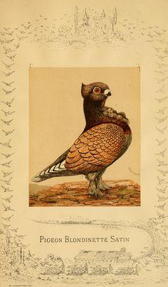 Monographie des pigeons domestiques. Paris :aux bureau du journal l'Acclimatation,[1883]. Biodiversitylibrary. Biodivlibrary. BHL. Biodiversity Heritage Library.