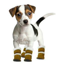Dogfashion Hugs dog productos en amazon