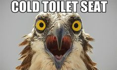 Which is worse? Freezing-cold toilet seat at home or a warm one in a public restroom?