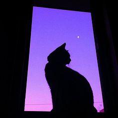 Black Cat Aesthetic, Violet Aesthetic, Dark Purple Aesthetic, Lavender Aesthetic, Aesthetic Colors, Purple Wallpaper Iphone, Cat Wallpaper, Purple Wall Art, Purple Cat