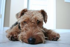 A Cleaner, Greener Home for You and Your Pet | petMD