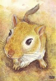 Image result for gerbil portrait
