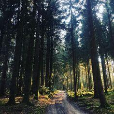 #backdoor #forrest #tree #trees #evening #walk #nature #foundin #switzerland