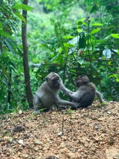 Monkeys at Thailand rainforest