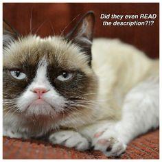 Pin Di Marlana Fury Su Memes Cat Memes Grumpy Cat Garfi And - Garfi is officially the worlds angriest cat