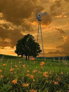 vintage windmill + spring field of day lilies + sunset +prairie
