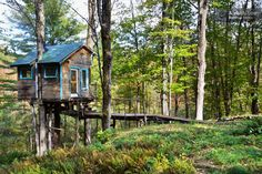 The Tiny Fern Forest Treehouse in Lincoln