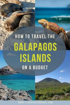 Useful tips and advice for your once in a lifetime trip to the Galapagos Islands on a budget. Get some helpful ideas about how to experience one of the world's most magical destinations on a shoestring.