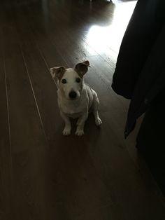 Onze lieve Max! Overleden op 26 mei 2016. Hij is goed 14 jaar oud geworden!