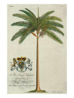 King Palm Giclee Print by Porter Design at Art.com