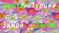Цветы Турции. Цветочный отдел магазина Arasta.