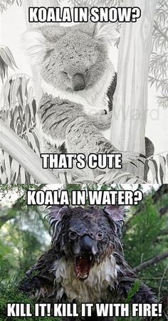 Koala in snow? That's cute. Koala in water? Kill it with fire! | JPEGY - What the Internet was meant for