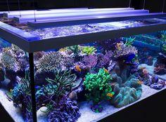 #illuminazione di un #acquario con tecnologia a #led.