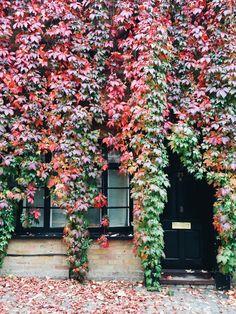 Fall leaves changing in Kensington, London // Weekend Scenes: October 10th & 11th — Sea of Atlas