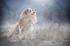 .... high five .... by Anne Geier on 500px