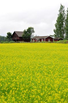 rural landscape on the coast of Southern Finland Finland Summer, Alaska, Summer Landscape, Landscape Pictures, Beautiful World, Norway, Countryside, Landscape Photography, National Parks