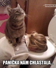 Funny Animals – A Funny Animal Videos Compilation 2015 Part 2 Funny Animal Videos, Funny Animals, Cute Animals, Wild Animals, Funny Cat Memes, Funny Cats, Funny Humour, Memes Humor, Crazy Cat Lady