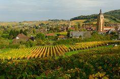 Arbois et ses vignes au coeur du Jura. Photo : Nicolas Monnot   Jura, France   #JuraTourisme