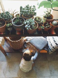 What Plants Can Teach You - Hurd & Honey