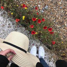 • Ready for a walk on the beach • #morning #walk #beach #seaside #eastbourne #pier #sea #poppies #seascape #pebblebeach #enjoythelittlethings #instapic #travel #travelphotography #seasideview #beachday #beachvibes #beachlover #beachtime #beachgirl #beachwalk #traveltheworld #visiteastbourne #seafront #seabreeze #picoftheday #iphone #seasidetown #vacationvibes #montereylocals #pebblebeachlocals - posted by raluca https://www.instagram.com/ralucadi - See more of Pebble Beach at…