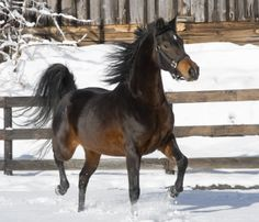 The Meaning of 10 Popular Horse Quotes: The buyer needs a hundred eyes, the seller not one.