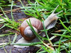 Keep slugs and snails away from your garden with these natural pesticides. Bug Control, Pest Control, Getting Rid Of Slugs, Natural Pesticides, Garden Guide, Small Farm, Organic Vegetables, Organic Gardening, Natural Remedies