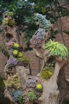 Check these DIY ideas for fact-finding that succulent gardening is truly just easy. Succulent Gardening, Cacti And Succulents, Planting Succulents, Planting Flowers, Succulent Images, Succulent Wall Art, Driftwood Planters, Air Plant Terrarium, Cactus Y Suculentas