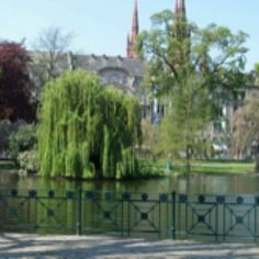 Wiesbaden- a must see city in Hesse, Germany. I had my picture taken by this tree. One of my favorites. Joy Of Living, Swans, Weekend Trips, Absolutely Gorgeous, Wonderful Places, 6 Years, Austria, Places Ive Been, Parks