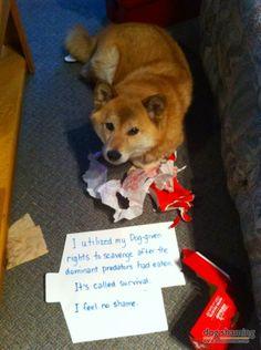 http://pet-supplies.shop-at-home.biz/ Shiba Survival Tactics