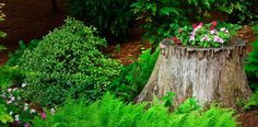 tree-stump-planter-surroundings