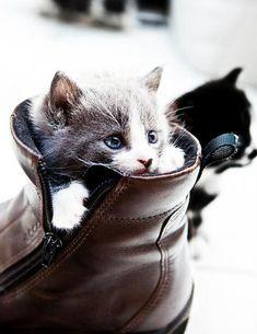 kitten by ArturoBenavidez1 via Flickr