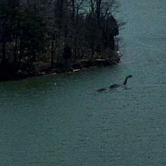 Lake Monsters Cryptozoology Lakes Mythical Creatures Paranormal Mysterious Mystery Mythological Ponds