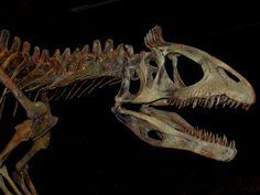 Cryolophosaurus - Wikipedia, the free encyclopedia  Cryolophosaurus ellioti, cast of head, ROMCC BY-SA 3.0 D. Gordon E. Robertson - Own work Cast of skull, Royal Ontario Museum  Cryolophosaurus ellioti, cast of head, Royal Ontario Museum, Toronto, Ontario, Canada