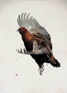 Karl Martens Red Grouse Flying Watercolour on Indian hand-made paper 29 x 22 in x cms Watercolor Bird, Watercolor Animals, Watercolor Paintings, Bird Paintings, Karl Martens, Detailed Paintings, Bird Artwork, Wildlife Art, Japanese Art