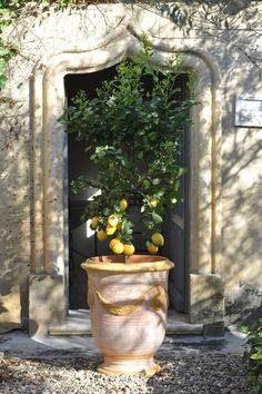 8 ways to create your French garden- Anduze urn French garden potted lemon French garden design ideas courtyard patio terrace small garden Garden Urns, Diy Garden, Garden Planters, Dream Garden, Vase Anduze, French Patio, Pot Jardin, Citrus Trees, Backyards