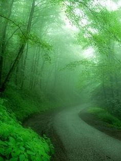 The bright green takes the gloom out of this misty day...