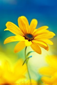 A little ray of sunshine…