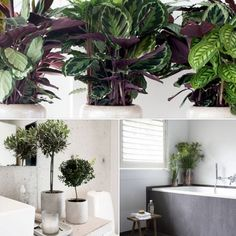 1000 images about bathroom badkamer on pinterest round bathroom mirror interieur and bathroom - Badkamer epuree ...