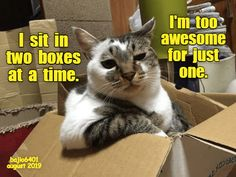 Cats Cat Jokes, Animal Jokes, Funny Cat Memes, Funny Cats, Cats Humor, Funny Cat Photos, Funny Animal Pictures, Cute Funny Animals, Cute Cats