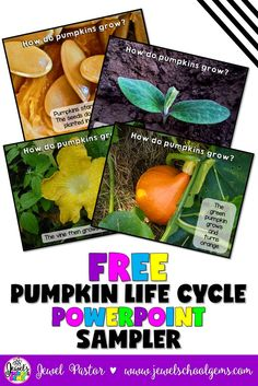 PUMPKIN LIFE CYCLE POWERPOINT SAMPLER by Jewel Pastor of Jewel's School Gems | Looking for FREE Pumpkin Life Cycle activities for teachers? Download my FREE Pumpkin Life Cycle PowerPoint sampler, along with a whole bunch of other FREE activities for science and math teachers, when you become a Jewel's School Gems subscriber. CLICK NOW! | Kindergarten | Preschool | Free | Teachers | Activities Free Teaching Resources, Free Activities, Science Activities, Teacher Resources, Classroom Activities, Classroom Ideas, Teaching Ideas, Science Lessons, Teaching Science
