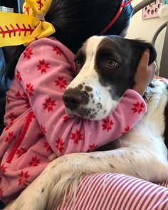 Cold this morning ❄️ 今日のロサンゼルスは風も冷たくて寒い。 いつもポカポカのジェイは湯たんぽがわり〜😊 #instagramdogs #mydog #doglife #lovelydog #englishspringerspaniel #boydog #doggylife #dogandkids #doggystyles #springerspaniel #adorable #doglover #cuteface #イングリッシュスプリンガースパニエル #インスタドック #いぬとの暮らし #いぬ部 #愛犬 #ペット #ロサンゼルス #犬と子供 #毎日の暮らし #スプリンガースパニエル #可愛い #🐾 #学校お休みの月曜日 #ハグタイム #湯たんぽ並み #ilcane #elperro Dogs, Animals, Animaux, Doggies, Animal, Animales, Pet Dogs, Dog, Animais