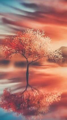 Autumn, tree, sunset, reflections, 720x1280 wallpaper