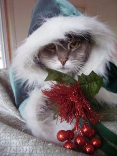 Christmas kitty cutie all dressed up and sending you some holiday cheer. I Love Cats, Crazy Cats, Cool Cats, Christmas Kitten, Christmas Animals, Christmas Eve, Retro Christmas, Christmas Christmas, Kittens Cutest