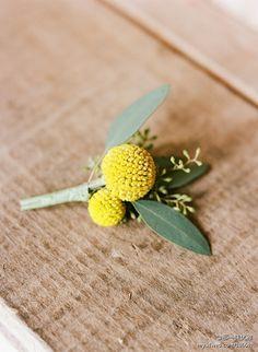 Yellow Craspedia with seeded eucalyptus. #boutonniere