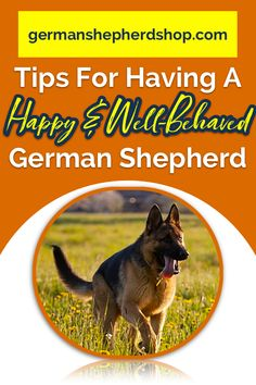 Wicked Training Your German Shepherd Dog Ideas. Mind Blowing Training Your German Shepherd Dog Ideas. Types Of German Shepherd, German Shepherd Training, German Shepherd Puppies, German Shepherds, Dog Training Methods, Basic Dog Training, Dog Training Techniques, Training Dogs, Puppy Obedience Training