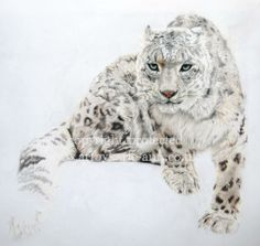 Snow Leopard Drawings | Pet Portraits and Wildlife Art: Snow Leopard Wildlife Art