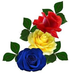 Wallpaper Nature Flowers, Rose Flower Wallpaper, Beautiful Flowers Wallpapers, Flowers Nature, Beautiful Roses, Rose Frame, Flower Frame, Flower Art, Hearts And Roses
